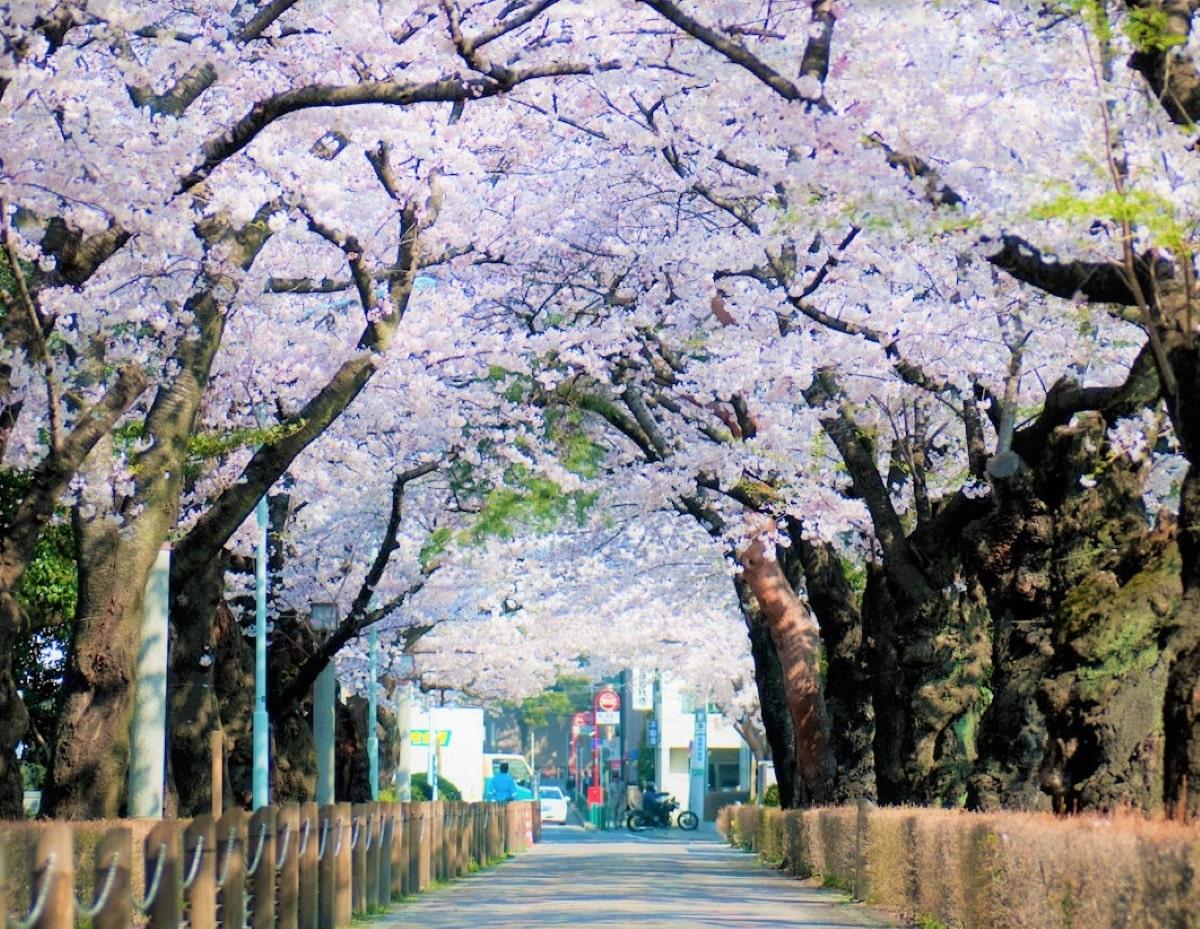 Du học Nhật Bản cùng MAP - Điều kiện du học Nhật Bản