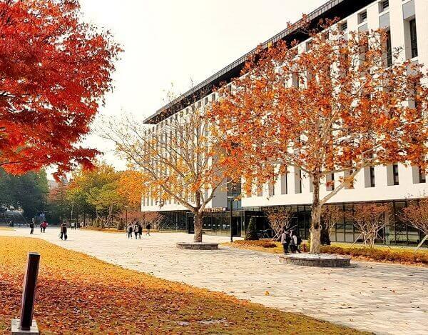 Trường Đại học Quốc gia Chungbuk rực sắc đỏ cam vào mùa thu