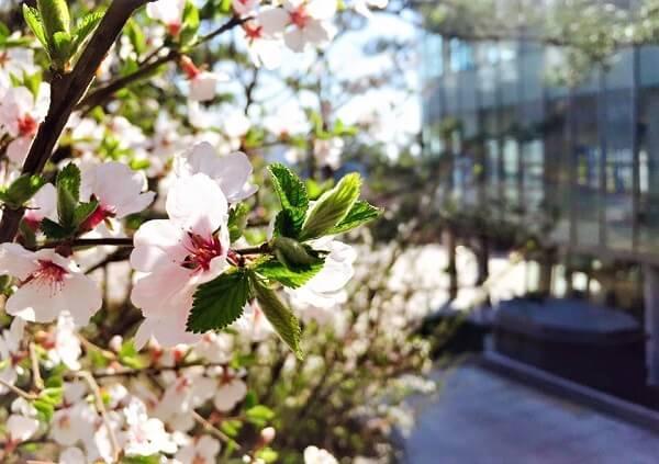 Mùa xuân tại Đại học Công giáo Hàn Quốc