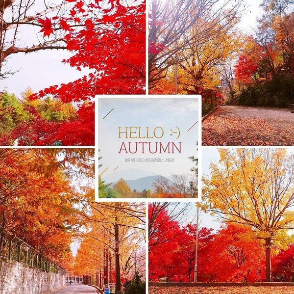 Khuôn viên trường Joongbu đẹp rực rỡ vào mùa thu