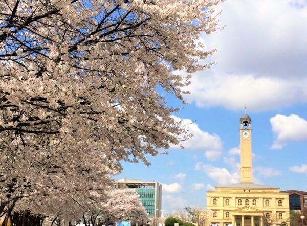 Khuôn viên trường Pyeongtaek đẹp nên thơ vào mùa xuân