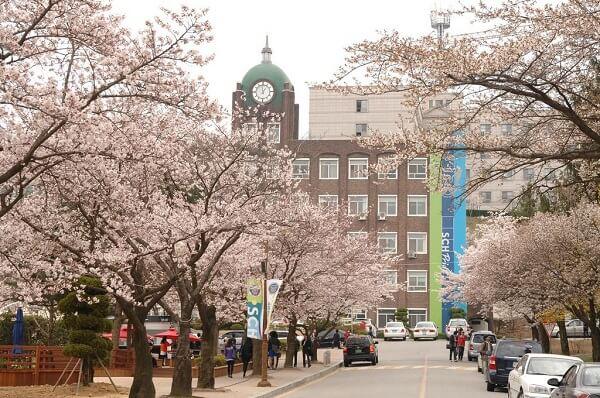Mùa hoa anh đào tại Soonchunhyang University