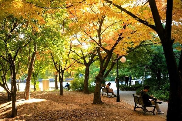 Học xá Đại học Catholic Hàn Quốc thơ mộng vào một chiều thu