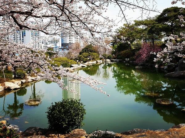 Khuôn viên ĐH Kyungnam đẹp nên thơ vào mùa xuân