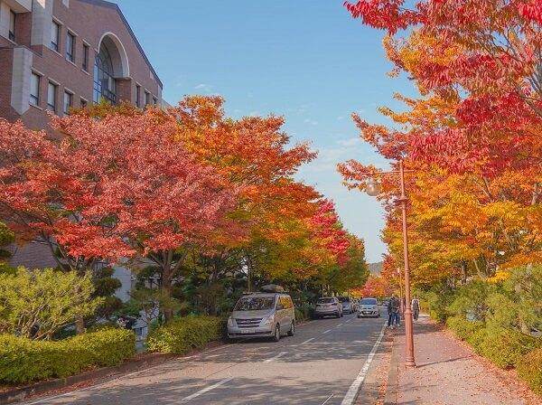 Khuôn viên lãng mạn của NSU vào mùa thu