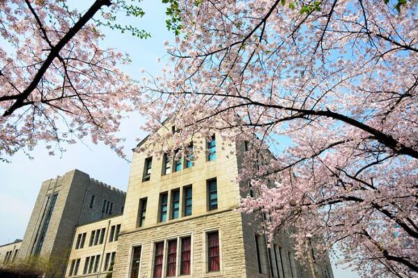 Mùa hoa anh đào tại Đại học Dongguk