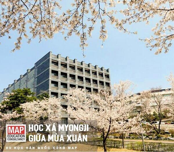 Học xá Myongji giữa mùa xuân