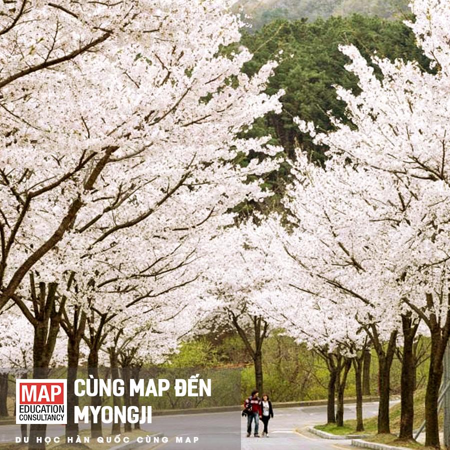 Đại học Myongji được Viện Giáo dục quốc tế quốc gia (NIED) công nhận là trường có nhiều học bổng dành cho du học sinh nước ngoài nhất