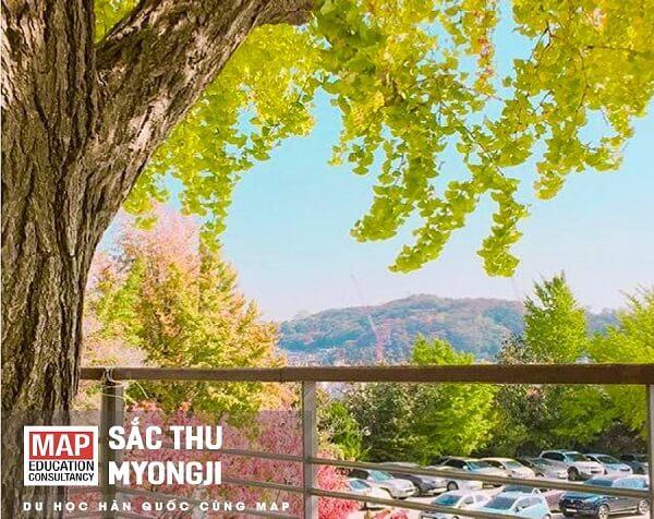 Sắc thu tại Đại học Myongji
