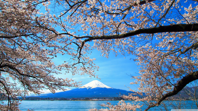 Du Học Nhật Bản: Thông Tin Cập Nhật Chi Tiết Từ A Đến Z 2