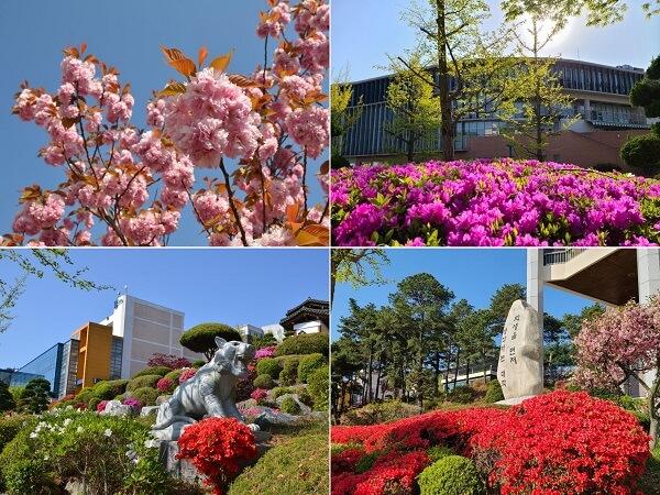 Đại học Pai Chai rực rỡ sắc hoa vào mùa hạ