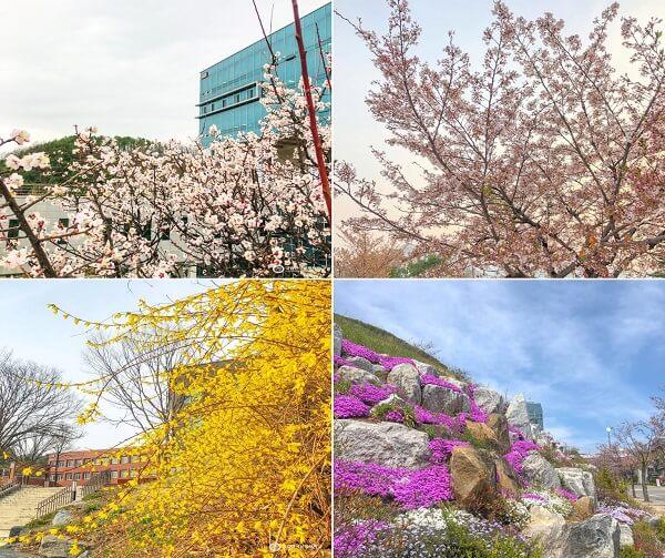 KNUT rực rỡ sắc hoa vào mùa xuân