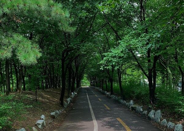 Hàng cây xanh mát trong phòng trường Bách Khoa Hàn Quốc