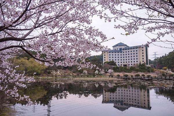 Học xá Đại học Hoseo vào mùa xuân