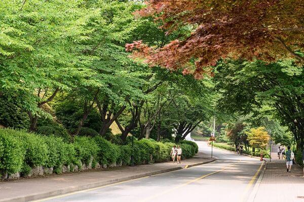Khuôn viên xanh mát trong trường
