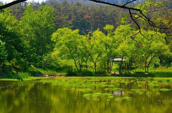 Khuôn viên xanh mát yên bình tại trường Howon Hàn Quốc