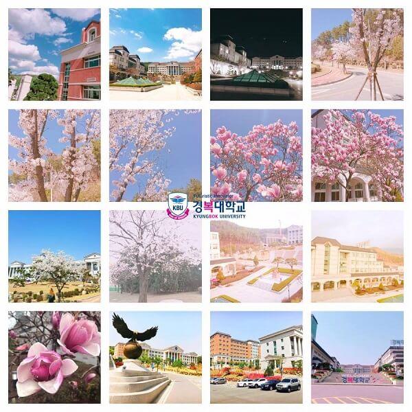 Kyungbok University rực rỡ vào mùa xuân