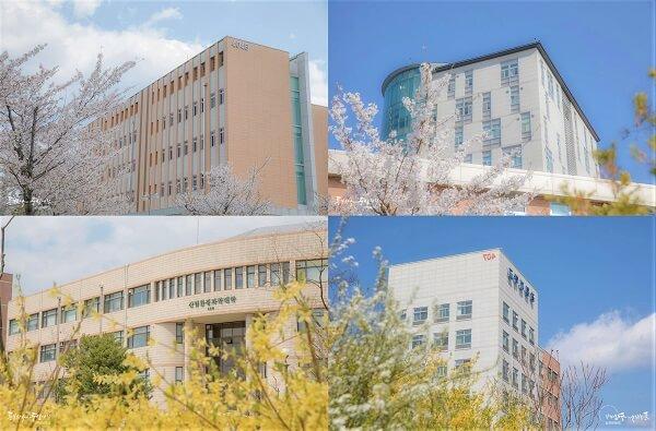 Kangwon National University rực rỡ sắc hoa vào mùa xuân