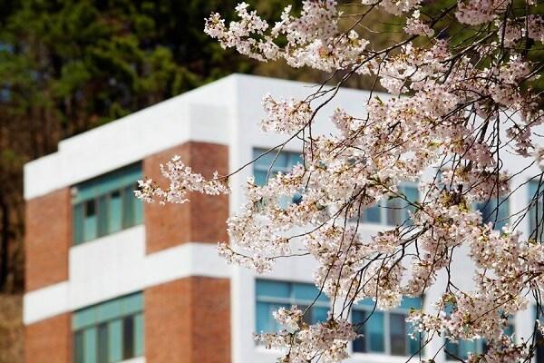 Học xá DJU rực rỡ vào mùa xuân