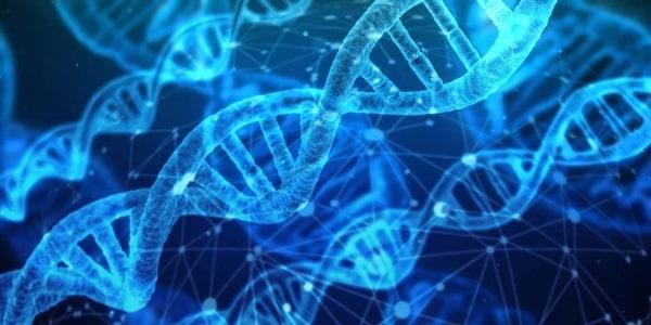 Công nghệ sinh học thường tác động đến hệ gen của các sinh vật sống