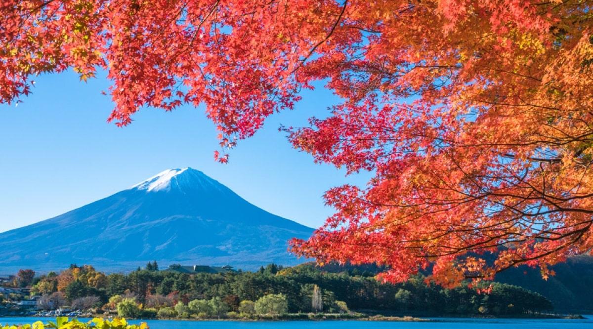 Du Học Nhật Bản Về Nước Làm Gì?