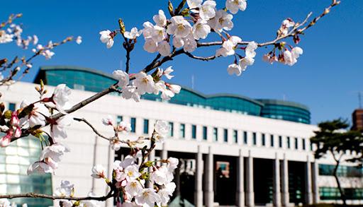 Học viện Nghệ thuật và Truyền thông Dong-Ah đẹp như mơ mỗi dịp xuân về