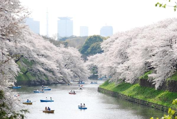 Du học Nhật Bản tại Tokyo, sinh viên quốc tế nên đến Ueno nhằm trải nghiệm văn hóa Edo xưa