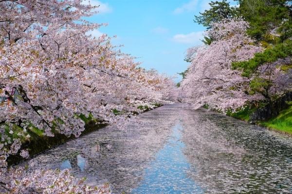 Thời tiết khi du học Nhật Bản kỳ tháng 4 là rất thuận lợi