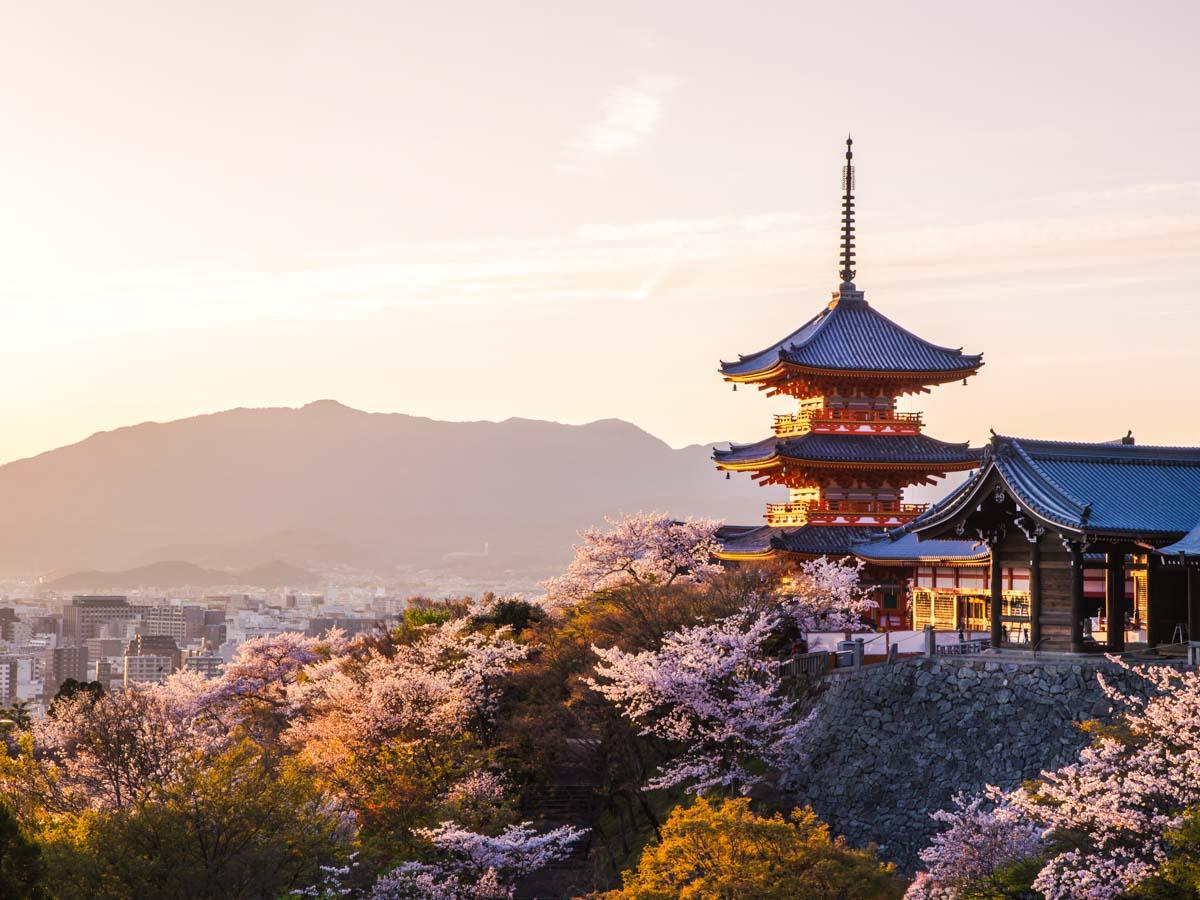 Du Học Nhật Bản Ngành Làm Bánh: Giấc Mơ Ngọt Ngào Và Đầy Màu Sắc Tại Xứ Sở Hoa Anh Đào