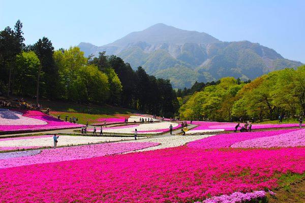 Công viên Hitsujiyama - Địa điểm yêu thích của sinh viên du học ở Saitama