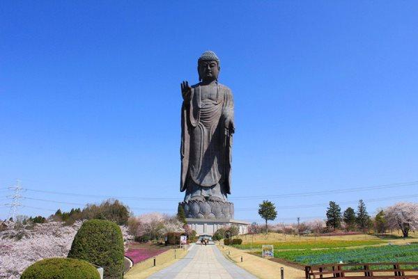 Đại tượng Phật Ushiku Daibutsu - Du học ở Ibaraki