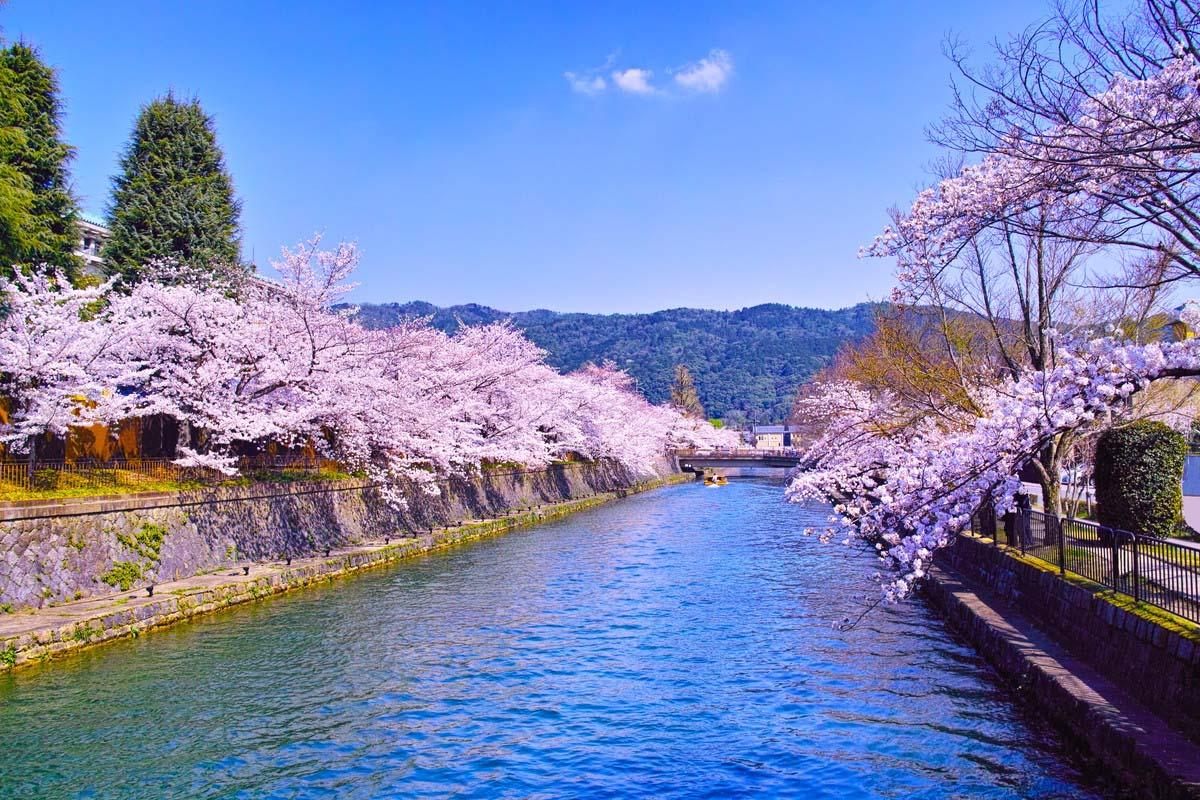 Du Học Nhật Bản Tại Aichi - Trạm Trung Chuyển Của Xứ Sở Hoa Anh Đào