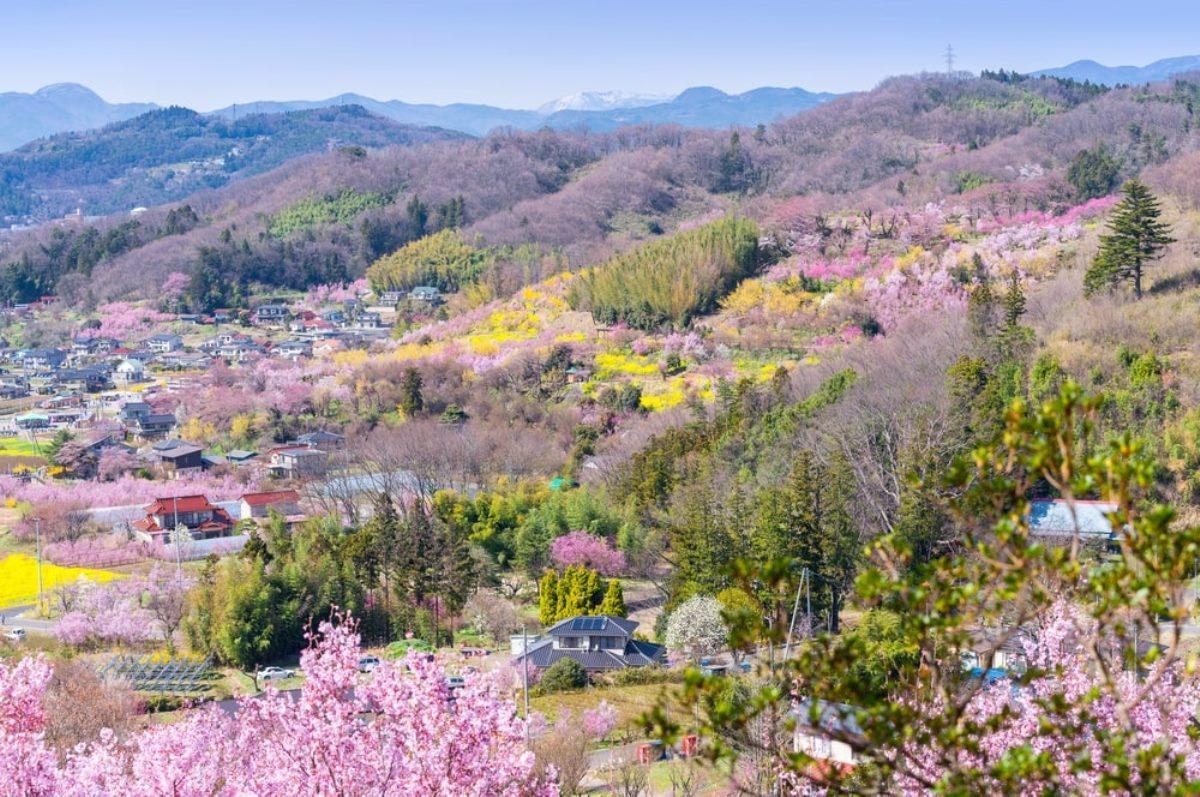 Du học Nhật Bản cùng MAP - Du học Nhật Bản tại Fukushima