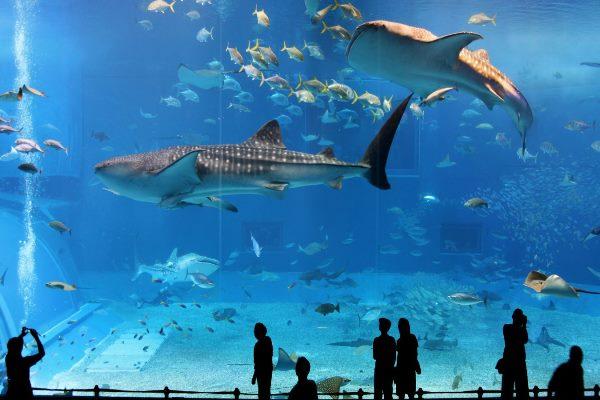 Thủy cung Aqua World - Du học ở Ibaraki