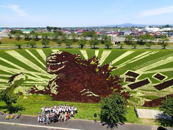 Du học tại Aomori, sinh viên cũng sẽ được chiêm ngưỡng nghệ thuật Tanbo trên các đồng ruộng