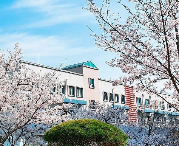 Học xá trường Gumi đẹp nên thơ vào mùa xuân