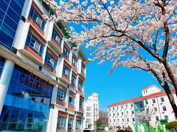 Khuôn viên trường Gumi vào một ngày xuân