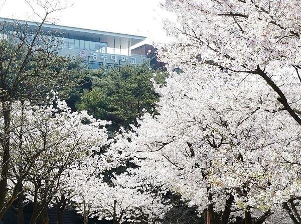 Học xá trường Gyeongju đẹp nên thơ vào mùa xuân