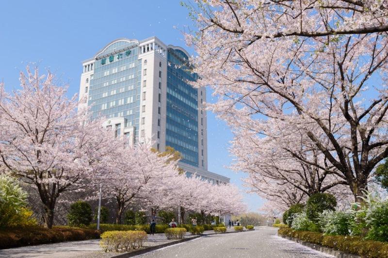 Đại Học Soka Nhật Bản – Ngôi Trường Thuộc Top 70 Tại Xứ Sở Hoa Anh Đào