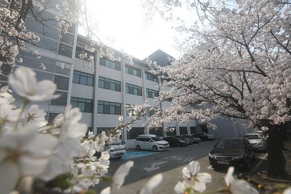 Khuôn viên trường thơ mộng vào mùa xuân